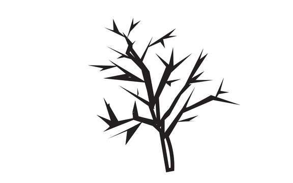 mesquite tree silhouette outline on white background