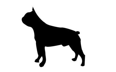 boston terrier silhouette on white background