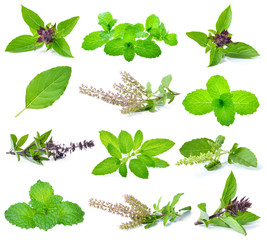basil, holy basil and mint leaves isolated on white.