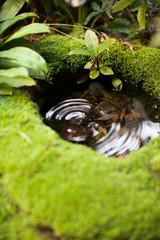 japan garden with moss