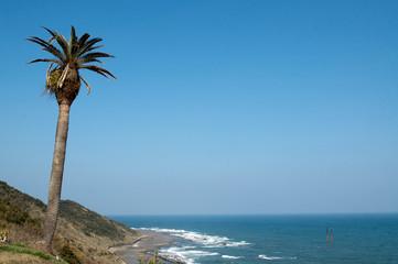 水平線と椰子の木