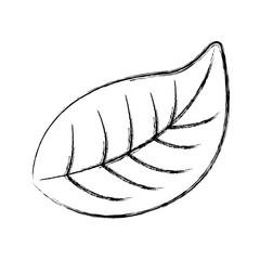 natural foliage leaf botanical icon vector illustration sketch design