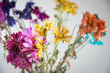 Flower Petal Multicolor Background Texture