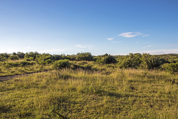 Dry Bush and Grassland with Blue Coudy Skyline Landscape