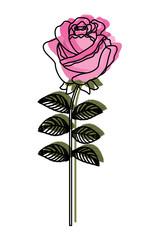 delicate flower rose stem leaves nature decoration vector illustration