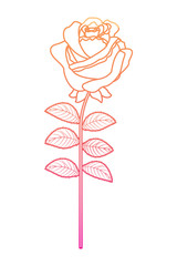 delicate flower rose stem leaves nature decoration vector illustration degrade color line image