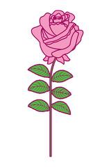 delicate flower rose stem leaves nature decoration vector illustration pink and green image