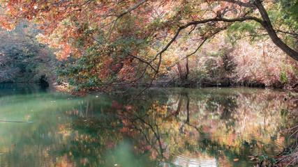 色付き始める震生湖