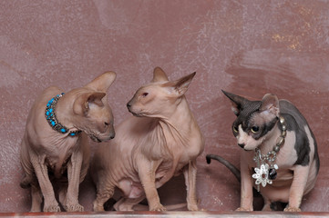 three cats of the sphinx with necklaces on the neck