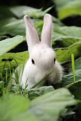 Weißer Hase im grünen Gras