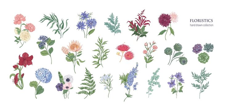 Collection of popular floristic flowers and decorative plants isolated on white background. Set of beautiful floral decorations. Botanical colorful hand drawn vector illustration in vintage style.