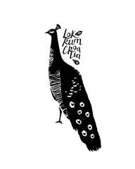 Peacock bird with lettering Locrum Croatia. Vector