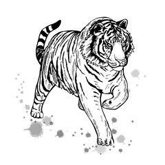 Hand drawn sketch style tiger. Vector illustration isolated on white background.