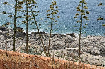 Wild coastal plants on sea rocks with a sea below