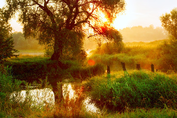Morning sunrise landscape. Sprawling tree on the bank of a small river. Morning haze, fog. Bright sunlight. Summer scene, warm shades, glare.