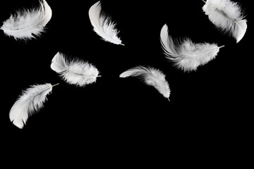 Abstract white feathers falling in the dark, isolated on black