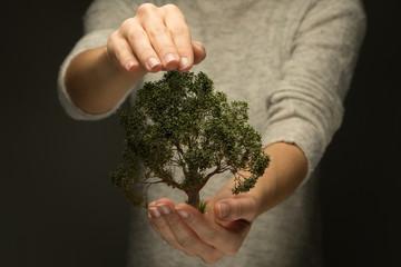 Person hält Hand schützend über Baum