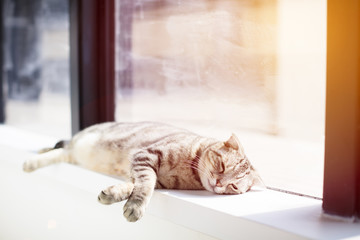 Cat sleeping on the windowsill.