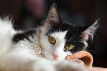 Кошка крупным планом с большими зелеными глазами и розовым носом, лежит на покрывале, с размытым фоном позади