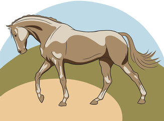 A sketch of a horse freely going forward.