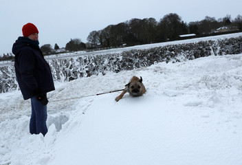 A dog falls into a snowdrift in Coleby
