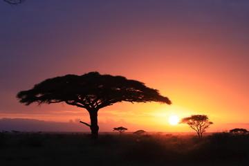 Deurstickers Kangoeroe Tanzania