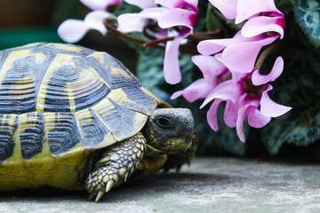 tartaruga vicino ai fiori