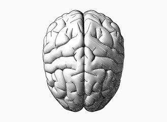 Black and white brain drawing illustration