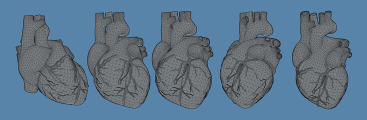 3D human heart illustration in various view