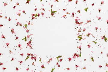 square frame of pink flowers and peach petals scattered over white background