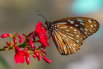 A Pretty Butterfly on a Flower