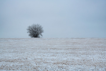 A Lone Tree in a Cold Winter Field on a Frigid Morning