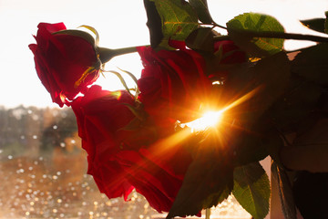 Flowers background with bokeh effect. Selective focus.  Bright bouquet, sunny lights.