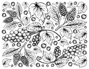 Hand Drawn of Amora Verde Berries and Assyrtiko Grapes