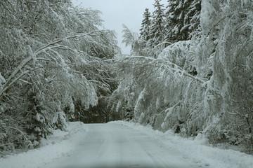 Winterforest