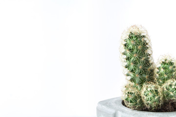 Cactus in a diy gray concrete pot on a white background