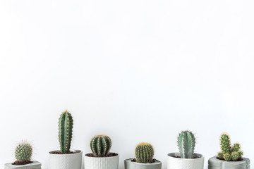 Many cactuses in concrete diy pots on a white background
