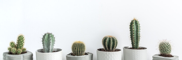 Panorama with many cactuses in concrete diy pots on a white background