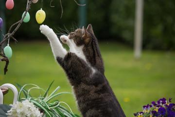 Katze am Osterstrauß