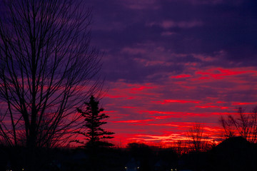 beautiful red and purple sky with siluete of trees at sun rise