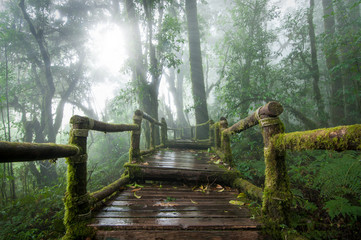 Wooden bridge in rain forest.