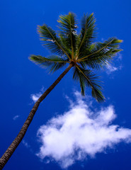 Palm tree at the beach against a bright blue sky.
