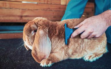Rabbit breeder. Pets and animals concept