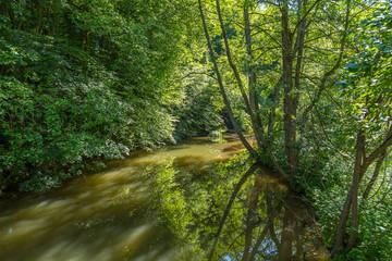 Brown river running inside a green european wood forest