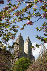 Enjoying spring in Central Park, New York, USA.
