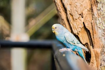 lovely bird, animal and pet in the garden