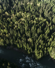 Oregon forest from the air