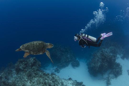 A female scuba diver with loggerhead sea turtle