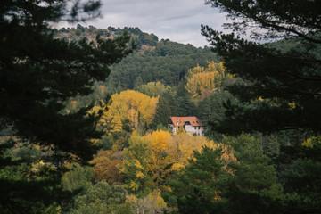Spanish Forest