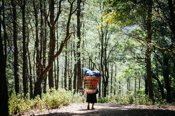 Sherpas are carrying a lot of baggage of tourists walk into the forest